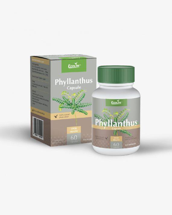 Phyllanthus-01